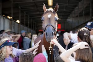 Horse Show Fans gather around Arabian Horse to pet it